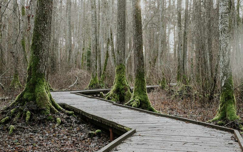 Rozalimo miško parkas
