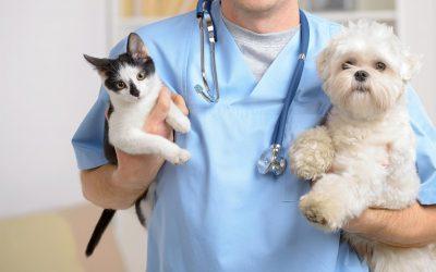 Veterinarijos gydytojas