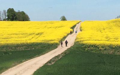 Camino Lituano 3
